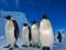 پوستر زیبا از خانواده پنگوئن ها