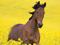 اسب قهوه ای و گلهای زرد