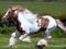 زیباترین اسب های جهان