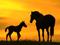 اسب ها در غروب زیبا