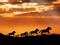 والپیپر اسب های وحشی