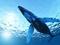 نهنگ گوژپشت