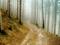 جاده خاکی در جنگل