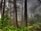 والپیپر زیبای hd جنگل