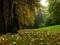 طبیعت جنگل سرسبز