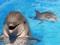 عکس دلفین دست آموز