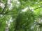 بر فراز درختان جنگلی