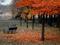 منظره خلوت پارک در فصل پاییز