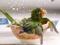 عکس طوطی در حال حمام