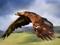 پرواز عقاب بزرگ