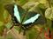 پوستر جدید پروانه