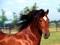 عکس اسب قرمز