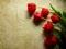 شاخه گل های لاله قرمز