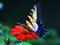 عکس پروانه روی گل