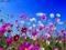 عکس گل های بهاری