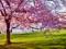 عکس زیبای شکوفه درخت بهاری