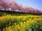 منظره بهاری زیبا
