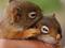 بچه سنجاب های بامزه
