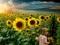 تصویر گرافیکی گل آفتابگردان