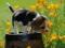 عکس توله سگ پاپی بامزه