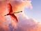 پرواز پرنده فلامینگو صورتی