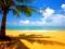 منظره زیبای نخل و ساحل