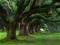 منظره درختان کهنسال