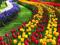 فستیوال گل هلند