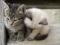 دو بچه گربه بامزه