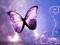 پروانه بنفش در حال پرواز