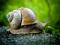 عکس حلزون جنگلی