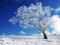 درخت برفی در فصل زمستان