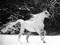 اسب سفید در برف