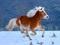 عکس اسب با یال سفید