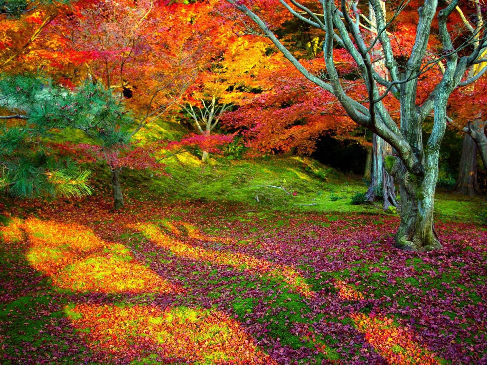 بهترین عکس های فصل پاییز
