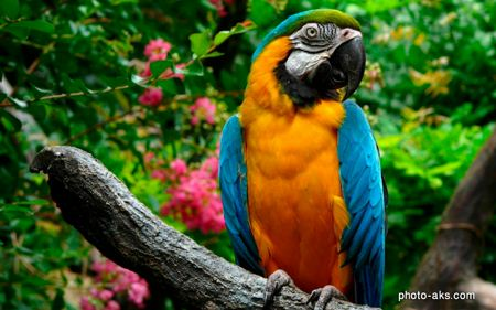طوطی خوش رنگ parrots colorfull