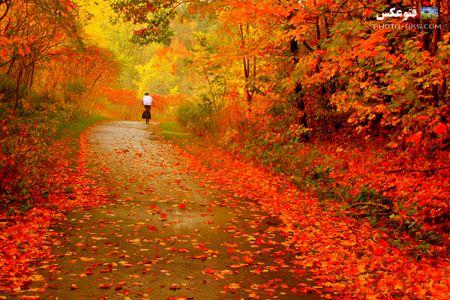 منظره پاییزی با برگ های رنگارنگ autumn nature landscape