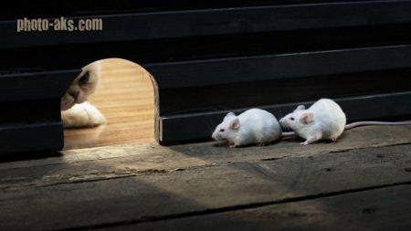 عکس بامزه از موش و گربه funny cat an mouse
