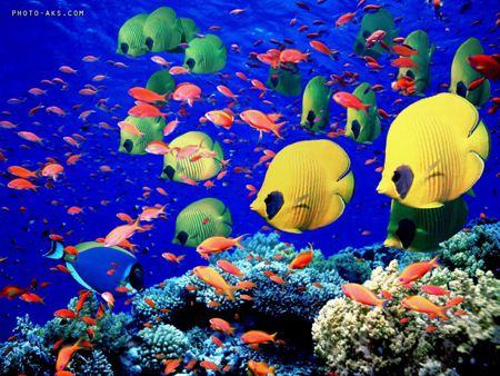 آکواریوم Aquarium
