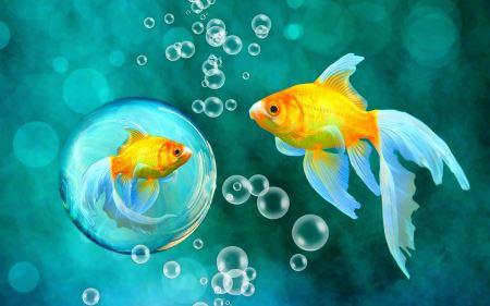 والپیپر حبابهای ماهی قرمز bubbles goldfish