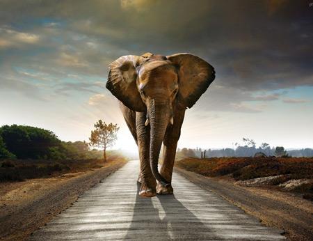 عکس فیل در جاده elephant road wallpaper