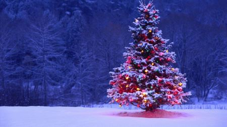عکس درخت کریسمس chrismas tree light