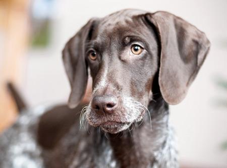 عکس جالب صورت سگ سیاه eye face dog