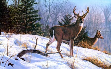نقاشی گوزن وحشی در زمستان forest deer snowy painting