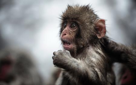 عکس تعجب بچه میمون باحال funny hd monkey wallpapers