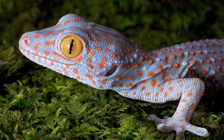 عکس مارمولک خانگی خوشگل gecko cute