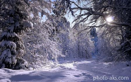 منظره جنگل پوشیده از برف winter in forest
