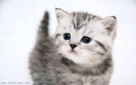 تصویر بچه گربه ناز و ملوس و مامانی Small Kitty widescreen