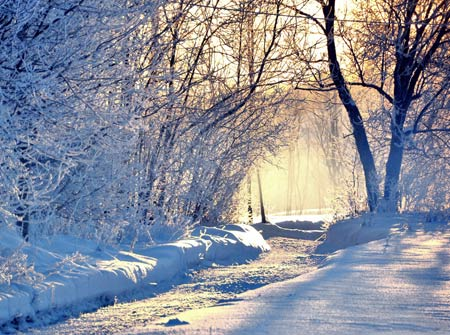 منظره درخت و زمستان winter wallpaper
