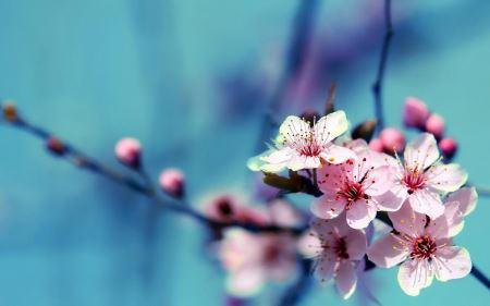 عکس گل و شکوفه بهاری shokofe bahari ziba